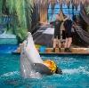 Дельфинарии, океанариумы в Ачуево